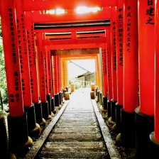 Torii gate trails lead you up and down