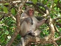Monkey on Monkey Beach