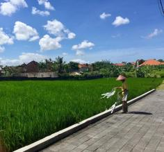 Rice Fields just outside our Villa