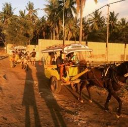 Horse and carts on Gili Trawangan