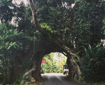 Enchanted road into Medewi