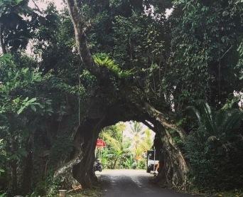 Enchanted road into Medewi