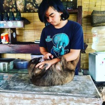 Another Luwak with his owner who runs the cafe