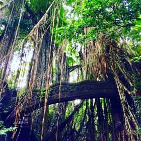 Ubud Monkey Forest & Sanctuary